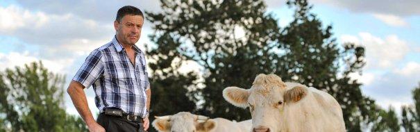 Eleveur avec ses vaches