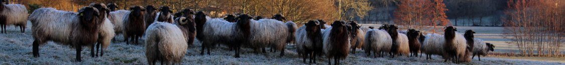 troupeau mouton