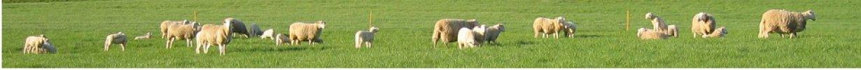 Moutons dans une prairie