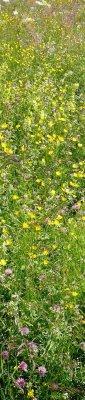 Prairie en fleur à Boyeux