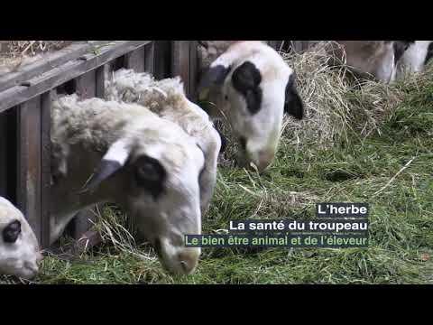 youtube-lefVnVhhViI-440-1548858940